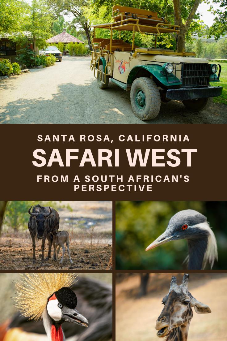 Safari West Pinterest